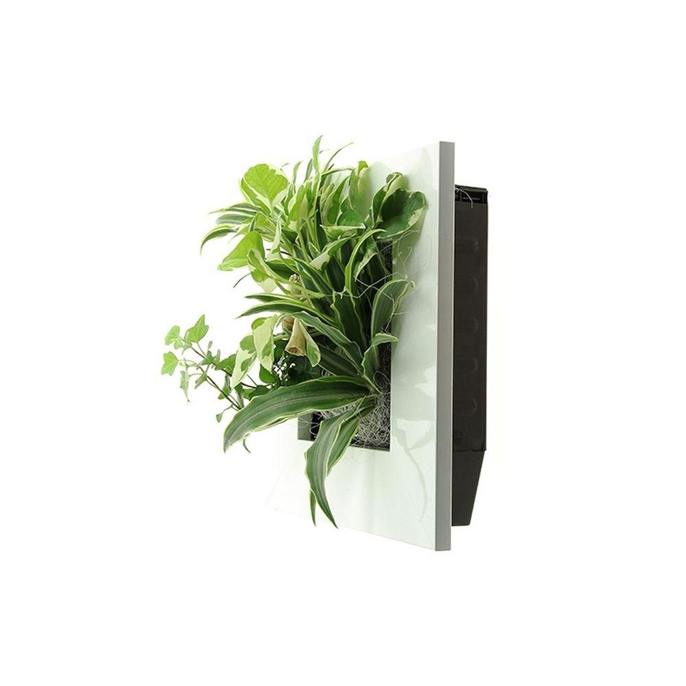 Cadre vegetal pas cher trendy cadre plante with cadre vegetal pas cher tableau vegetal ikea - Mur vegetal interieur pas cher ...