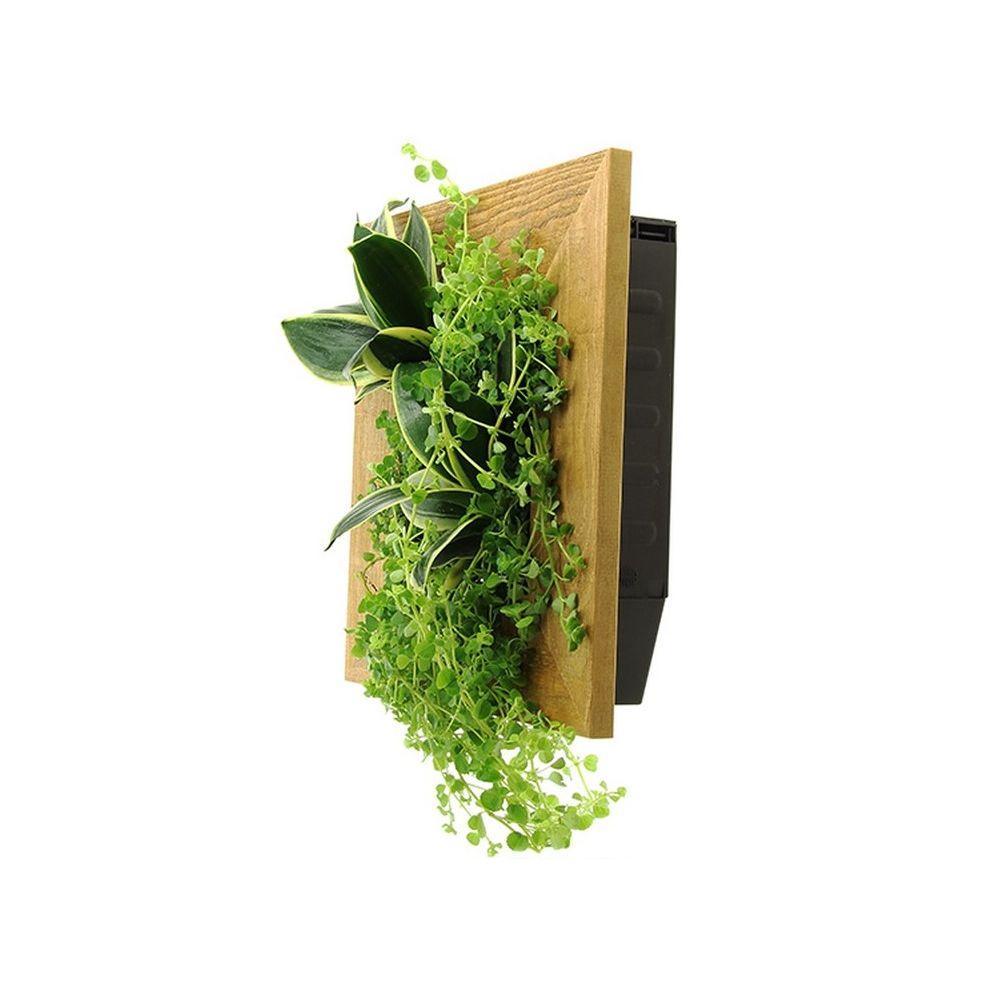 cadre vegetal interieur collection design inspiration pour le jardin et son. Black Bedroom Furniture Sets. Home Design Ideas