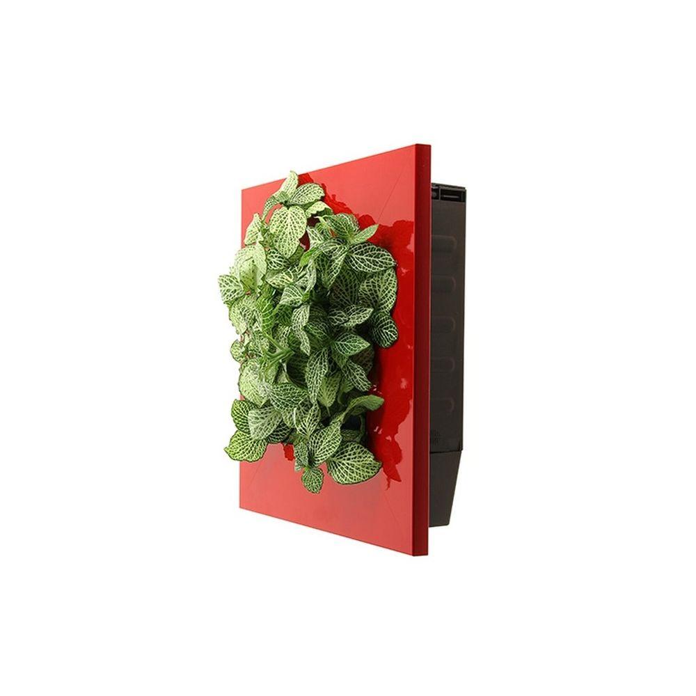 Cadre végétal Wallflower Kyoto Rouge S