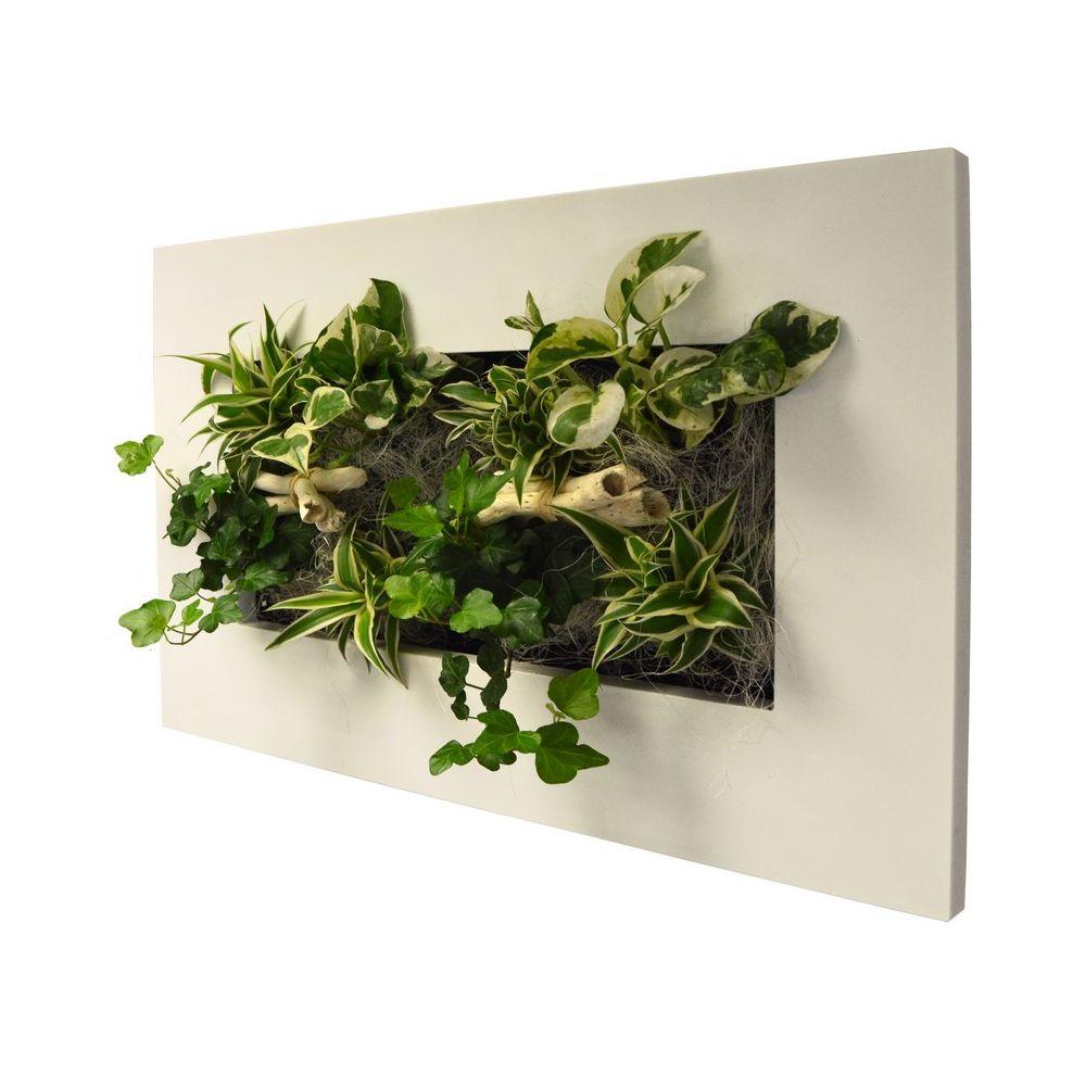 Tableau v g tal wallflower kyoto blanc m cadre v g tal - Tableau vegetal ...