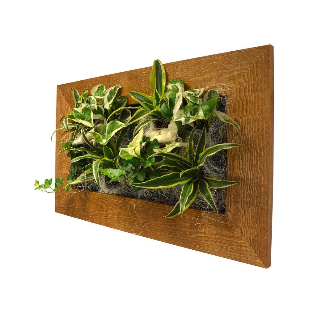 Tableau v g tal wallflower kyoto vieux bois m cadre - Tableau vegetal ...