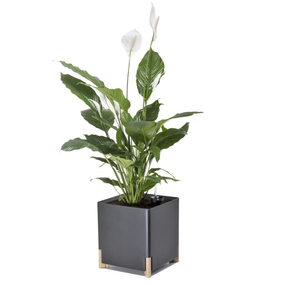 bac fleurs sur pieds l40 h45 anthracite mondum gamm vert. Black Bedroom Furniture Sets. Home Design Ideas