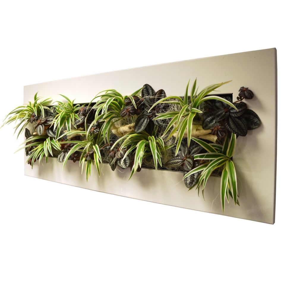Tableau v g tal wallflower kyoto blanc l cadre v g tal - Tableau vegetal ...