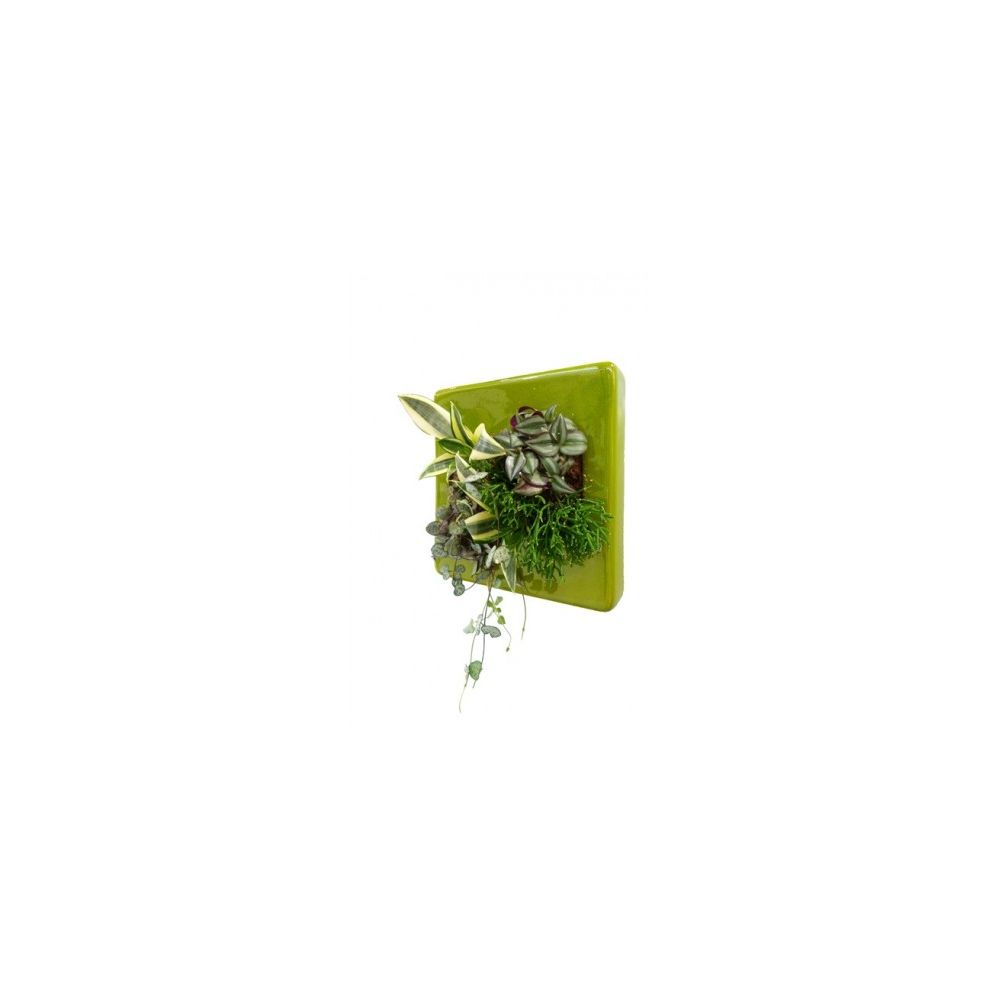 Cadre végétal Flowerbox Céramic carré vert