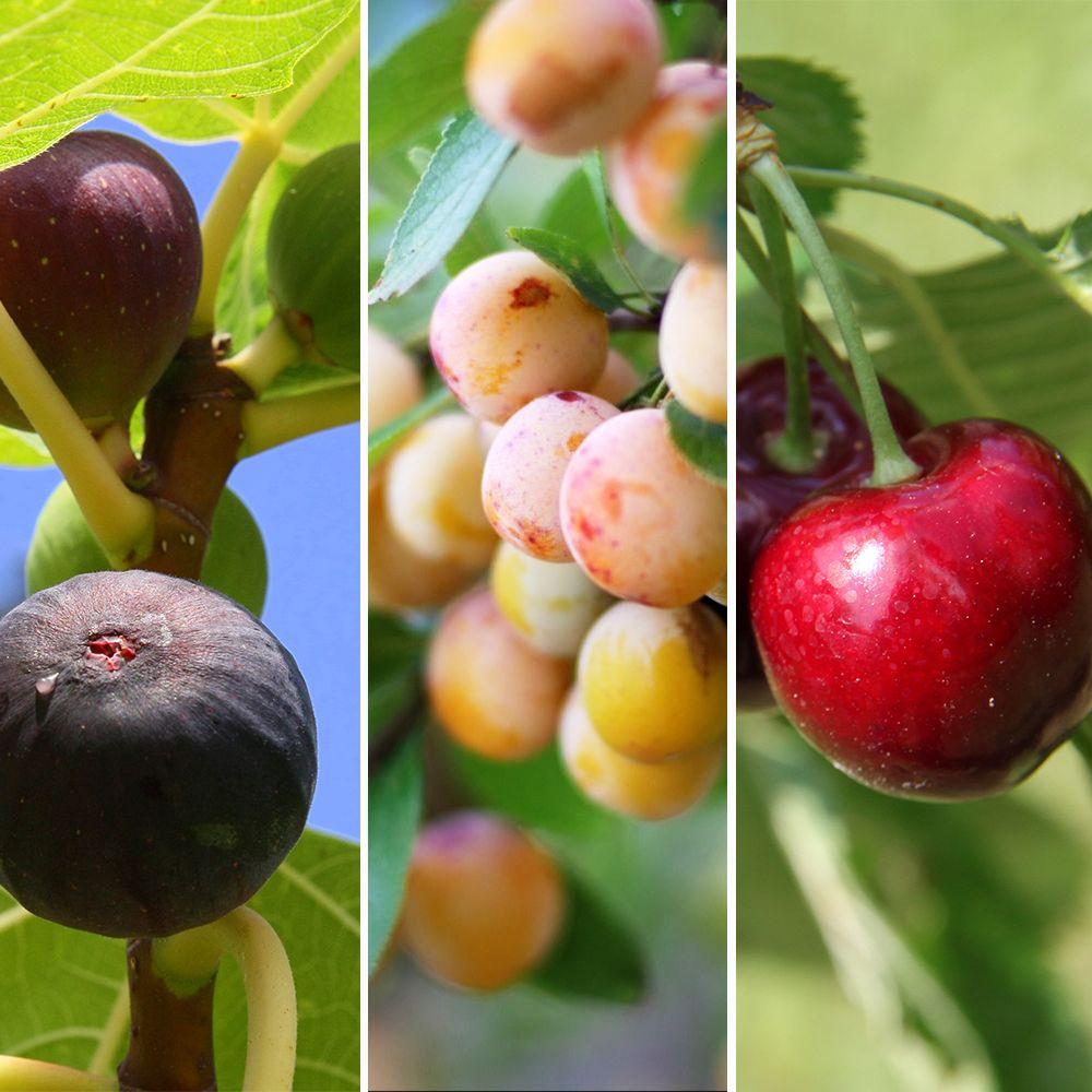 Kit : les meilleurs fruitiers autofertiles