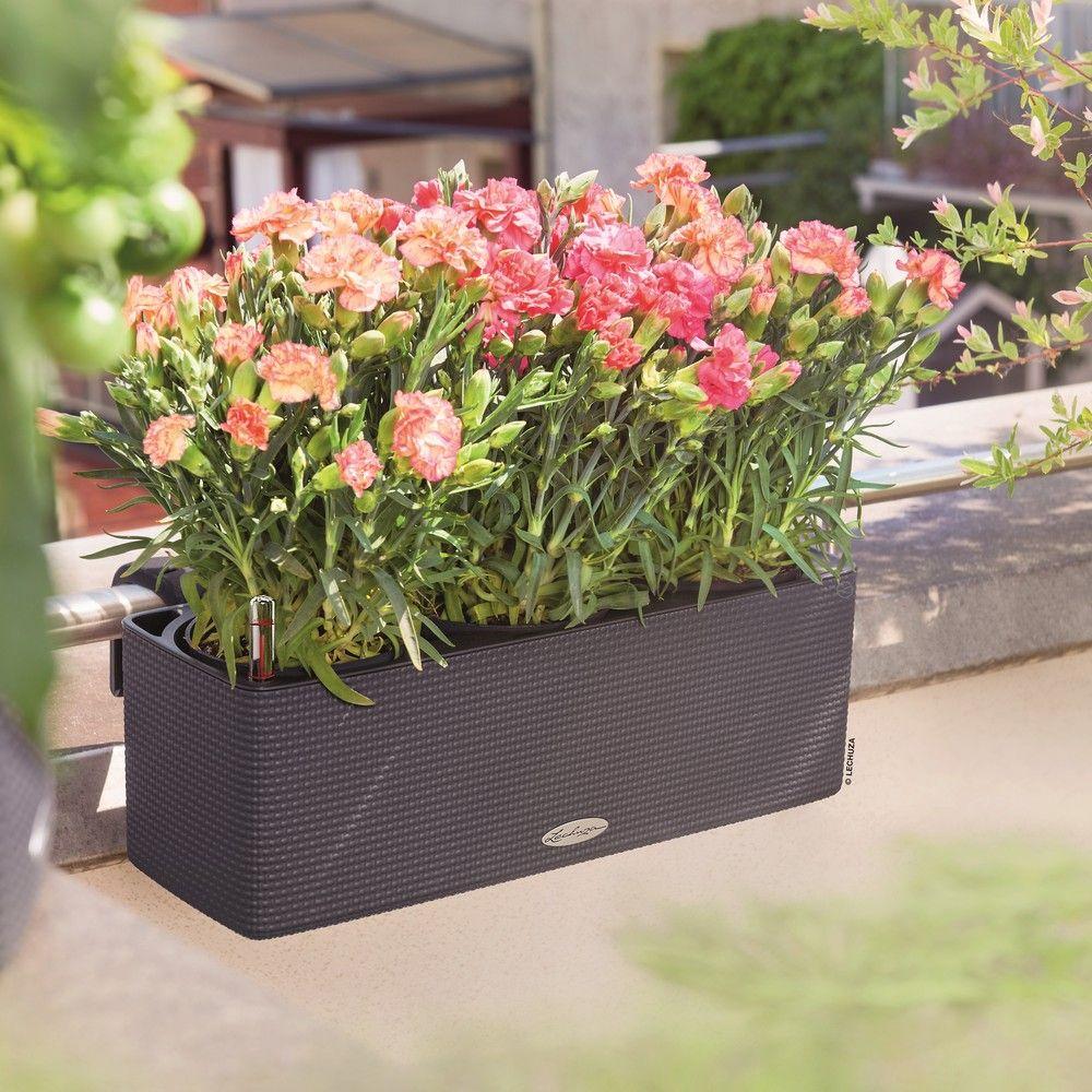 Jardinière Lechuza Balconissima anthracite + supports