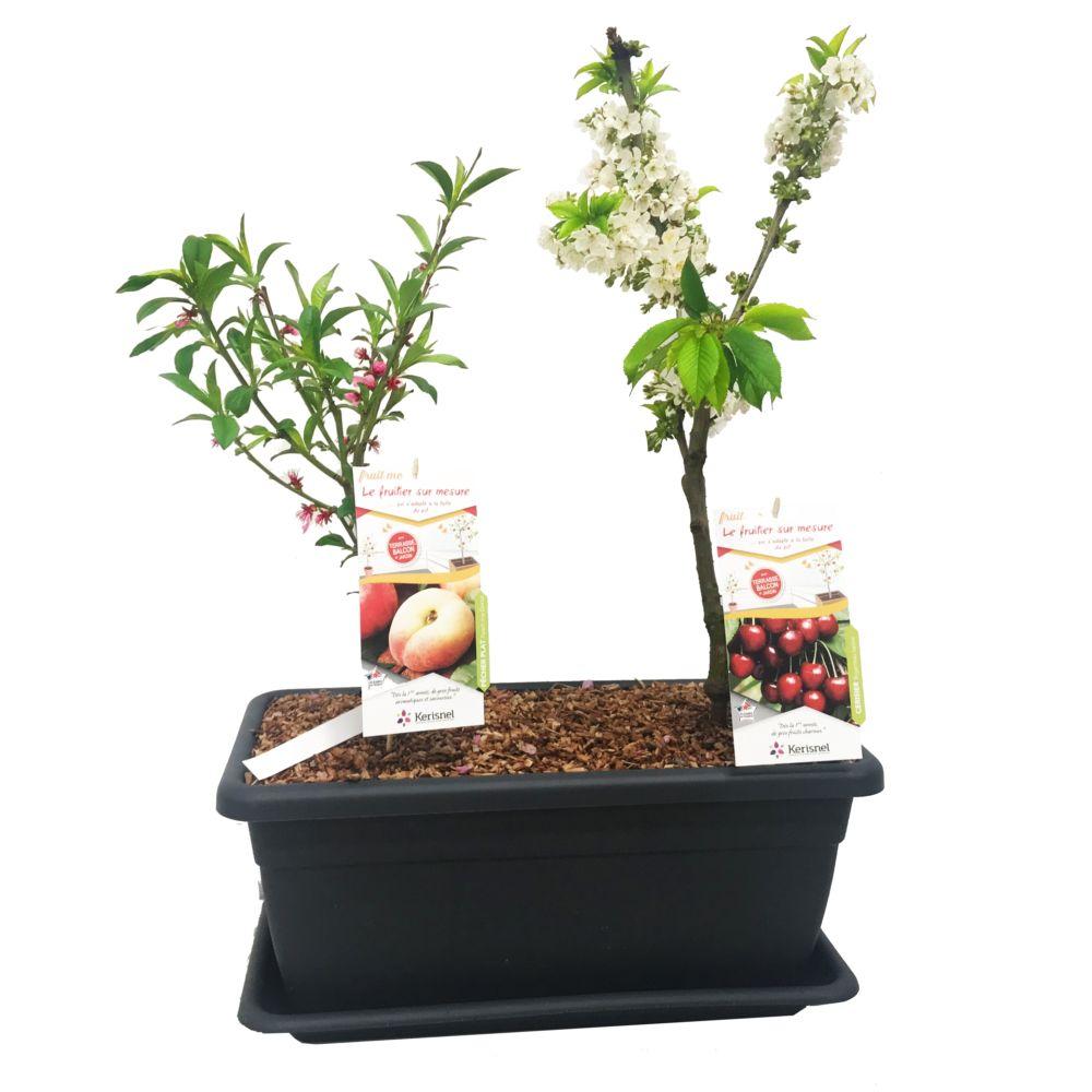 Cerisier Cherry me et pêcher Donut en jardinière – autofertiles