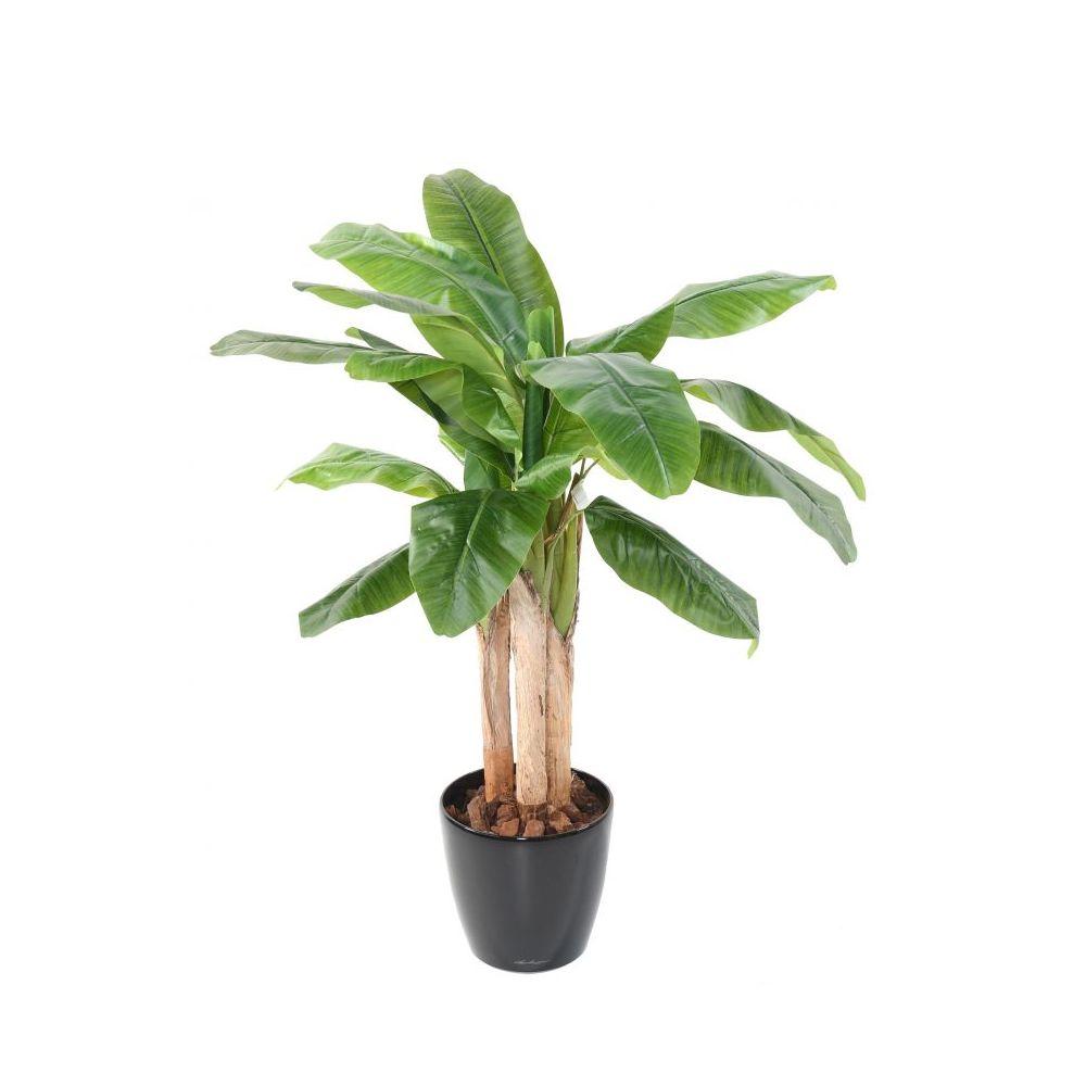 plantes tronc achat vente de plantes pas cher. Black Bedroom Furniture Sets. Home Design Ideas