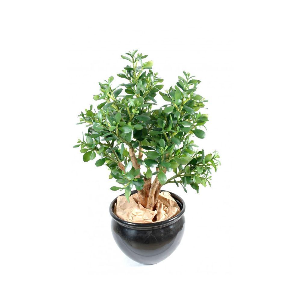 plante grasse crassula artificielle hauteur 65 cm gamm vert. Black Bedroom Furniture Sets. Home Design Ideas