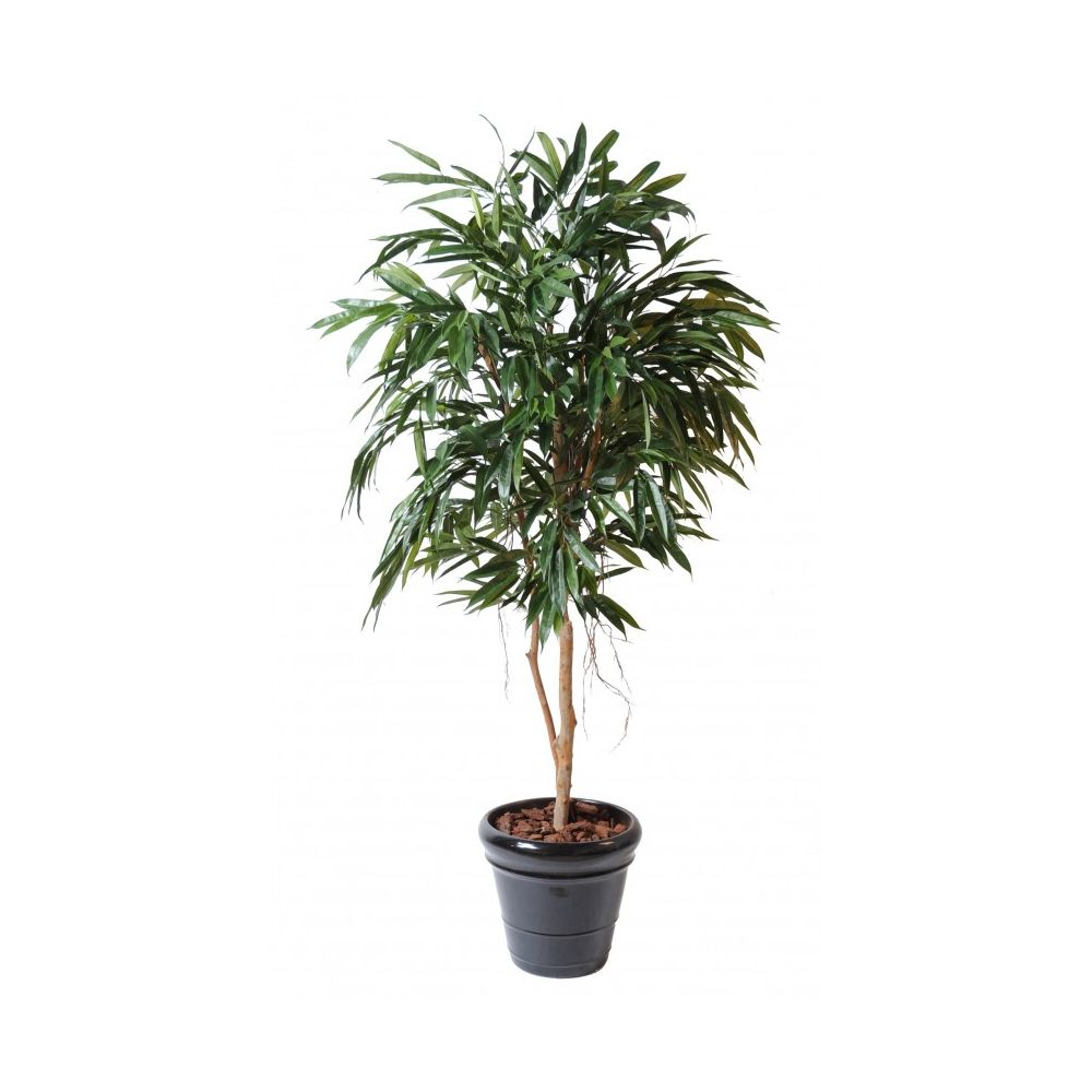 Ficus Alii artificiel