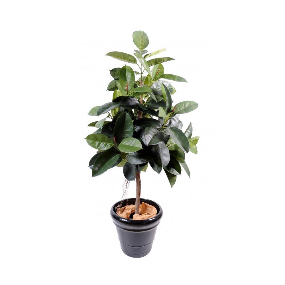 Caoutchouc Ficus elastica artificiel