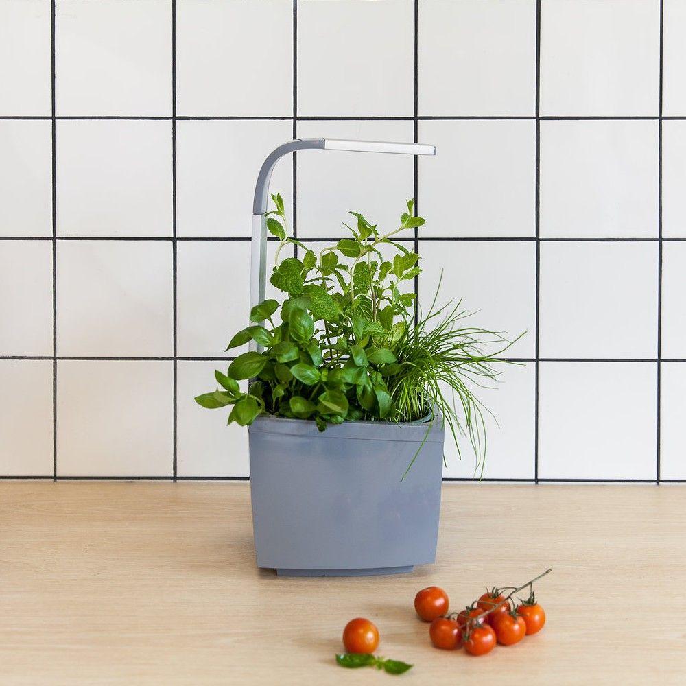 Kit : Potager d'intérieur connecté Tregren T3 gris + 4 herbes aromatiques