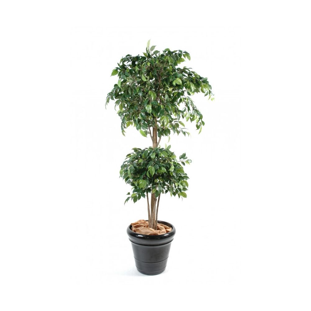 Ficus double boule, 1m50 (tronc naturel, feuillage artificiel)