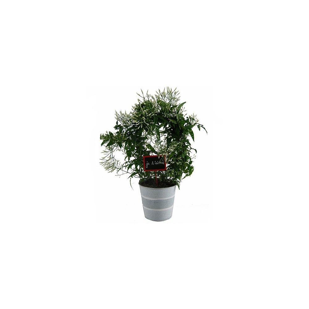 jasmin officinal cache pot zinc livr sur arceaux hauteur avec pot 40 cm cache pot zinc. Black Bedroom Furniture Sets. Home Design Ideas