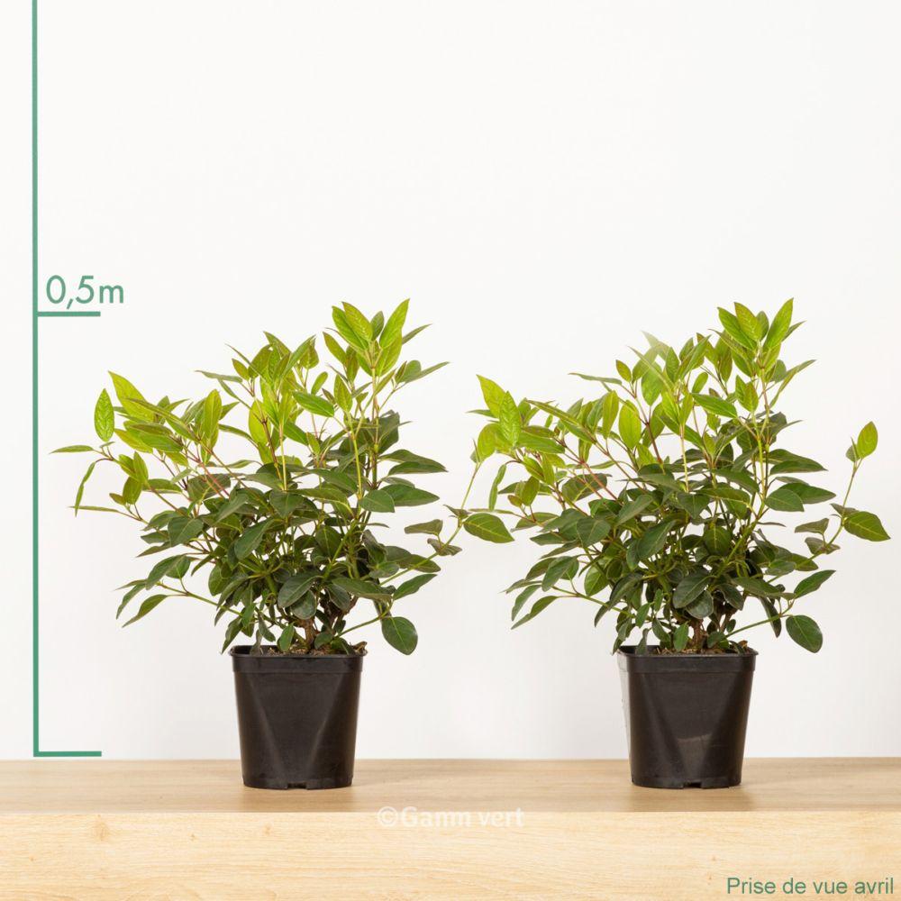 laurier tin pot de 2 litres gamm vert. Black Bedroom Furniture Sets. Home Design Ideas