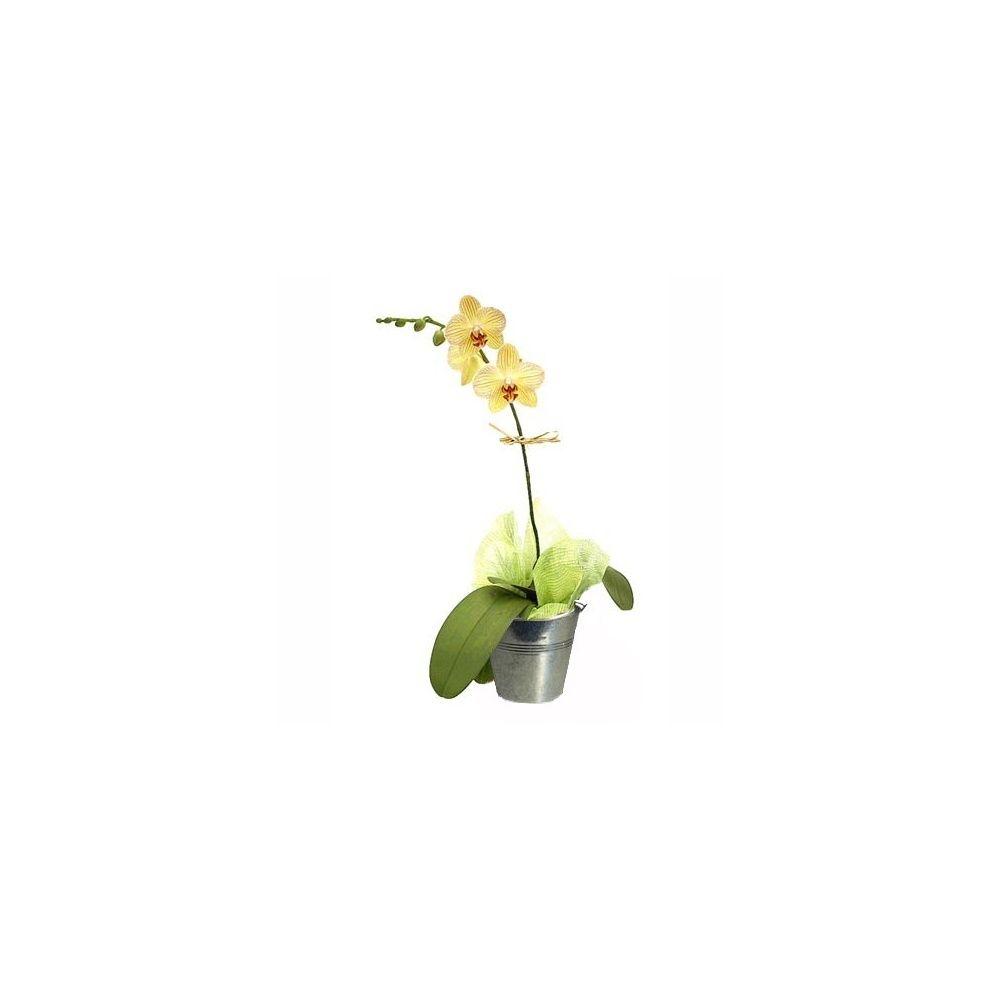 Orchid e phalaenopsis orange en fleurs 1 hampe florale - Comment couper orchidee apres floraison ...