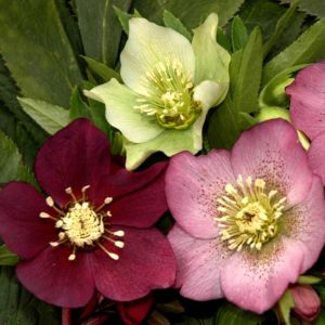 Awesome photos de plantes vivaces contemporary - Plantes vivaces fleuries ...