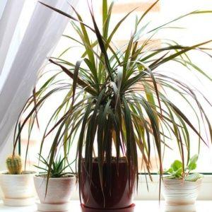 plante verte classique