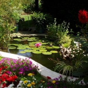 bassins de jardin