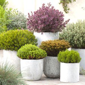 arbuste de decoration extrieure simple arbuste en pot exterieur arbuste en pot exterieur hiver. Black Bedroom Furniture Sets. Home Design Ideas