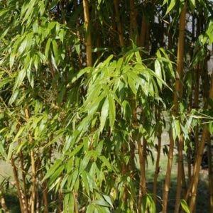 Plantes de haie - Gamm Vert