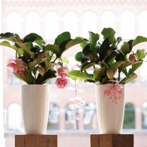 plante gamme vert
