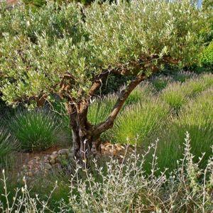 buissons exotique très rustiques