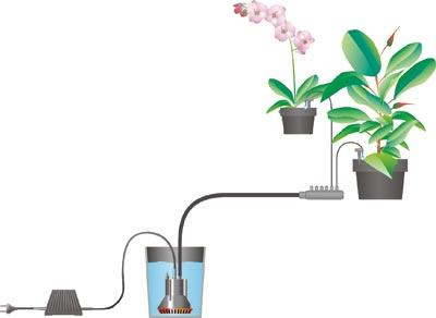Choisir Son Système D Arrosage De Vacances Pour Ses Plantes D Intérieur Gamm Vert