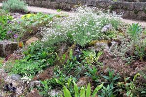 Créer un jardin de rocaille | Gamm vert