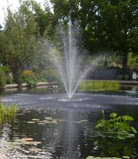 Entretien de son bassin de jardin | Gamm vert