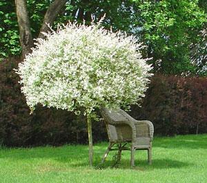 Arbuste Pour Jardiniere Exterieur