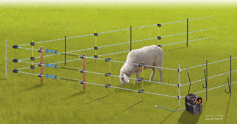 Choisir sa clôture électrique pour animaux : chien, chevaux