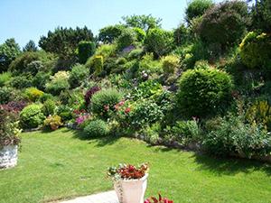 6 points-clés pour aménager et fleurir un talus   Gamm vert