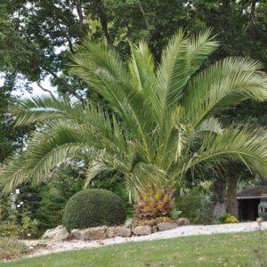 Variete Palmier Exterieur