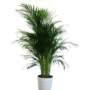 Plantes Pour Le Salon Gamm Vert