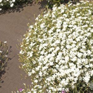 d154e5ba7ea Vivaces fleuries - Gamm Vert