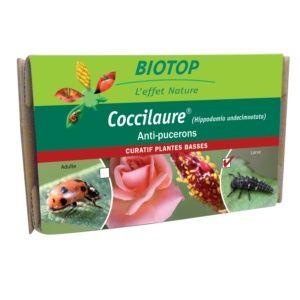 Coccilaure 30 larves, anti-pucerons plantes basses Biotop