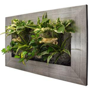 Cadres Végétaux Tableaux Végétaux Et Compositions Gamm Vert