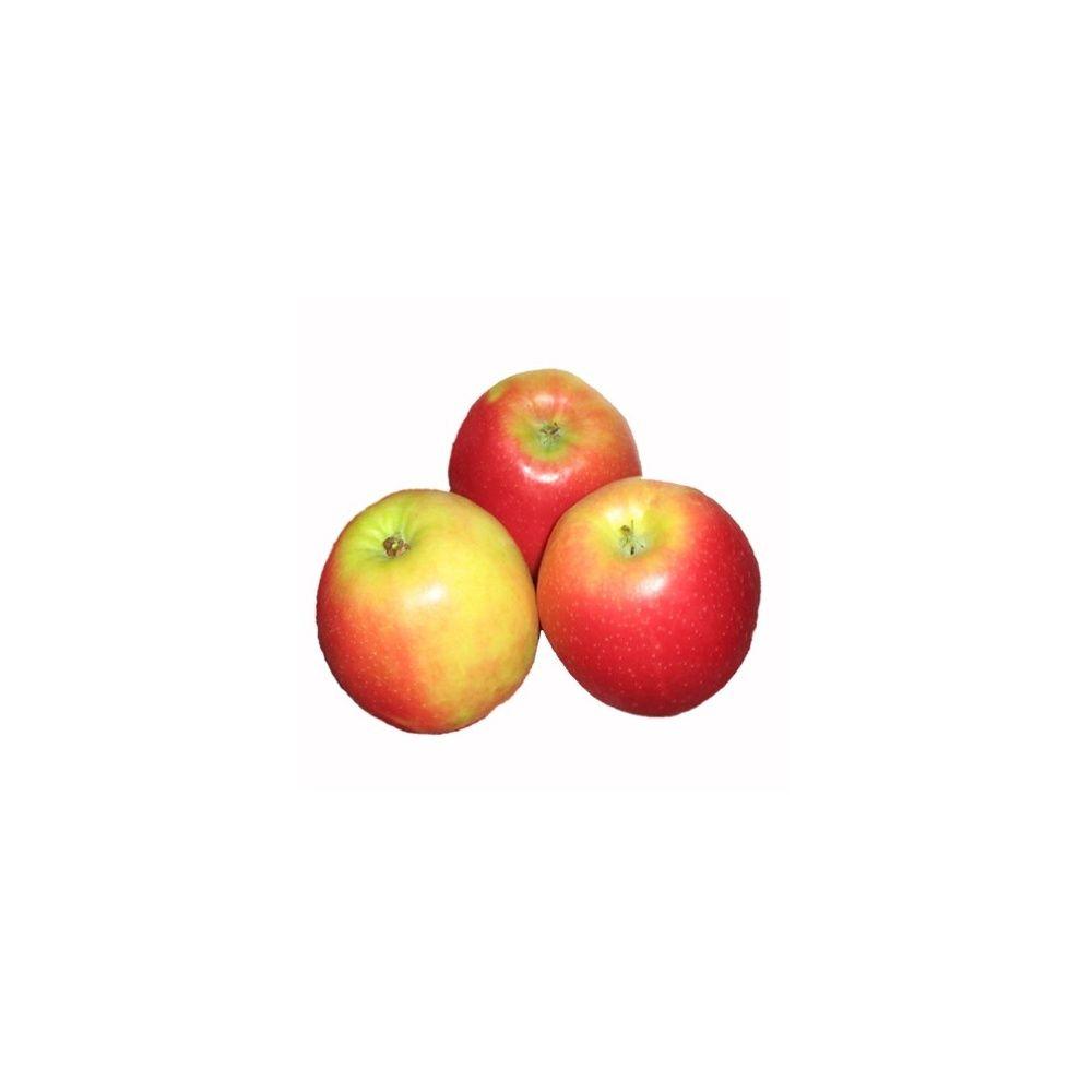 Pommier 'Jonagold' : taille en quenouille, pot de 10 L