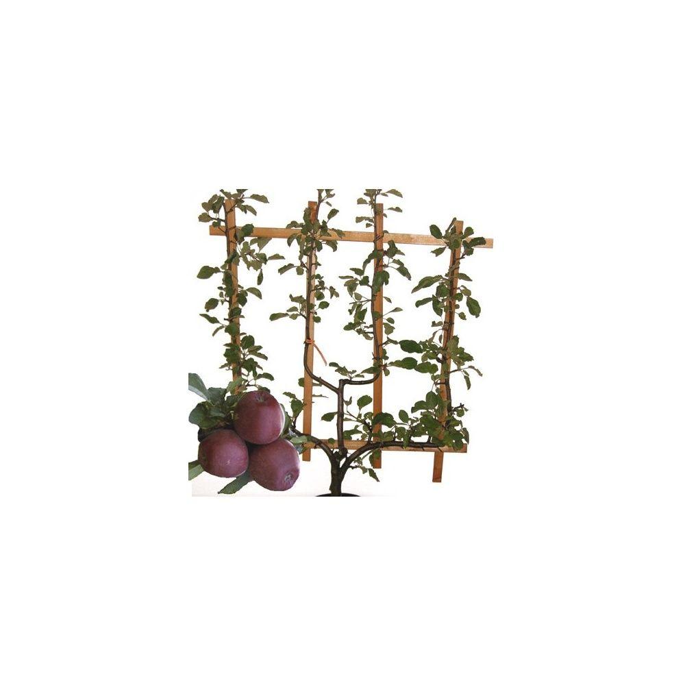 Pommier 'Starking Delicious' : taille en palmette verrier