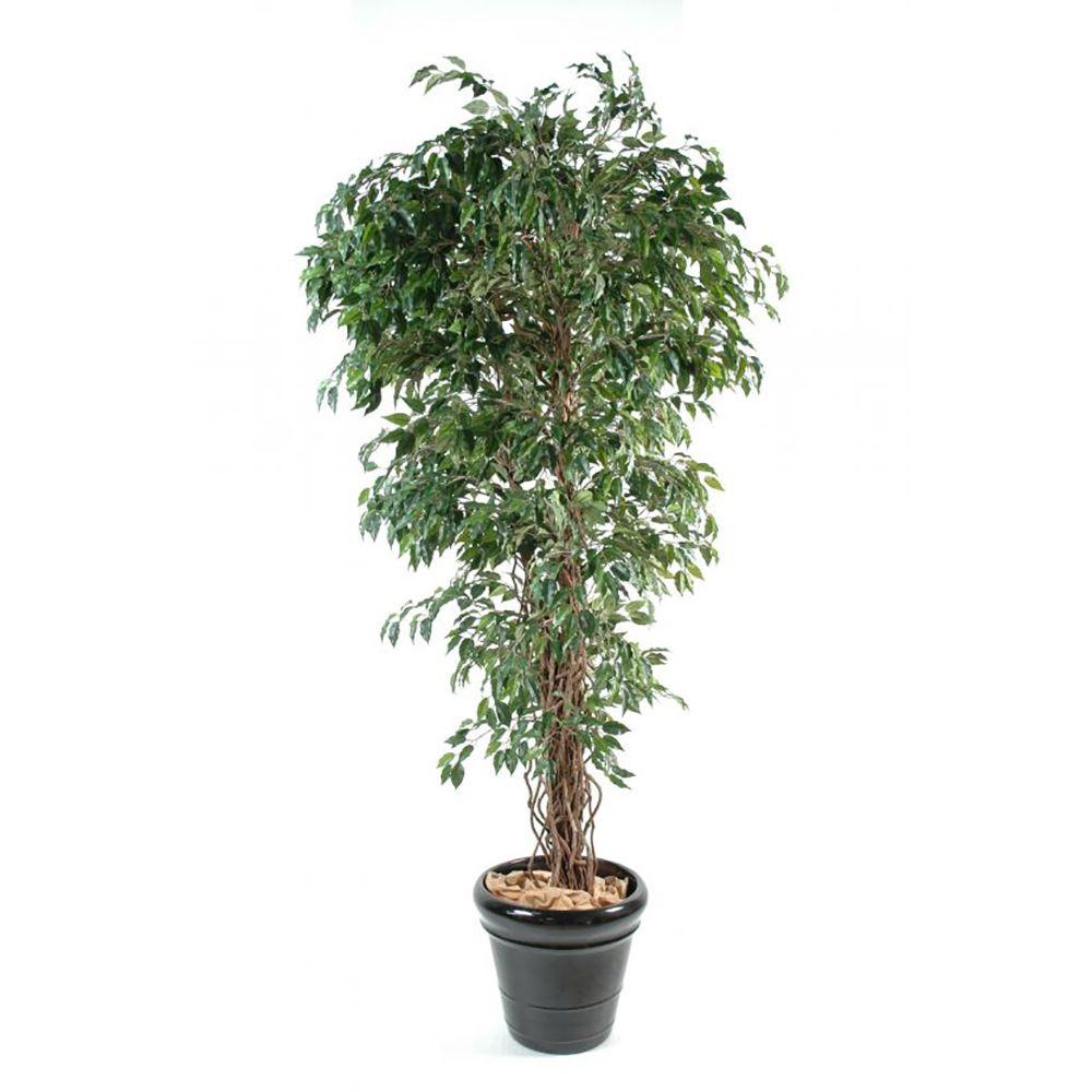 Ficus lianes petites feuilles H180cm (tronc naturel, feuillage artificiel) non rempoté
