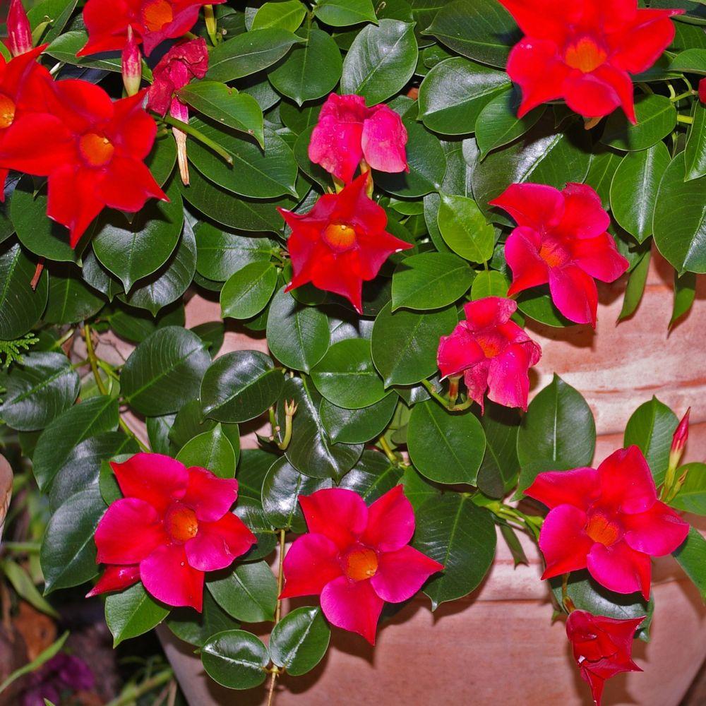 100 Remarquable Idées Plante Fleur Rouge Exterieur