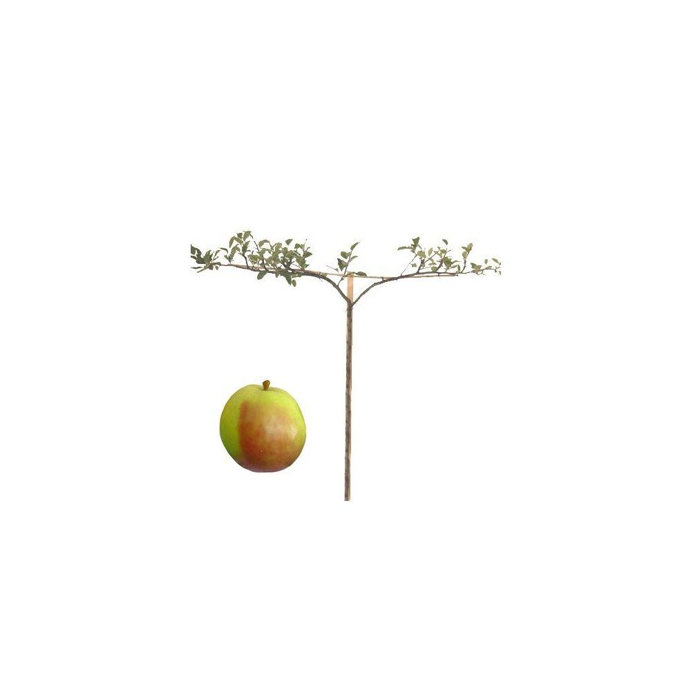 Pommier 'Rambour d'hiver' : taille en cordon double 0,80