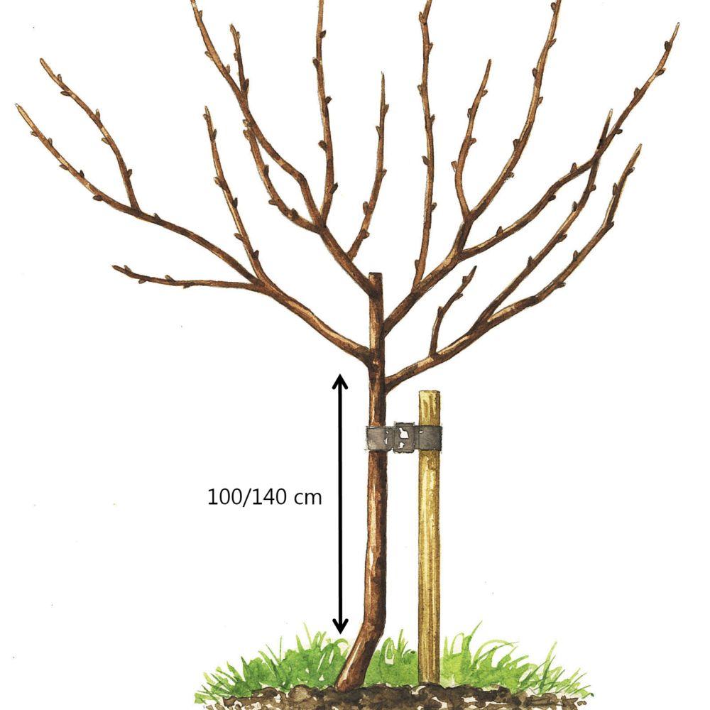 Encore 25110 arbres fruitiers vert