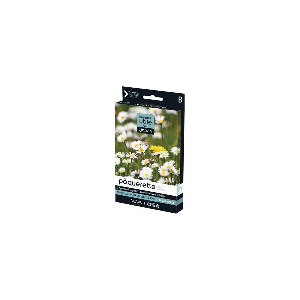 Ou Acheter De La Mousse Pour Piquer Des Fleurs une fleur utile au jardin : la pâquerette