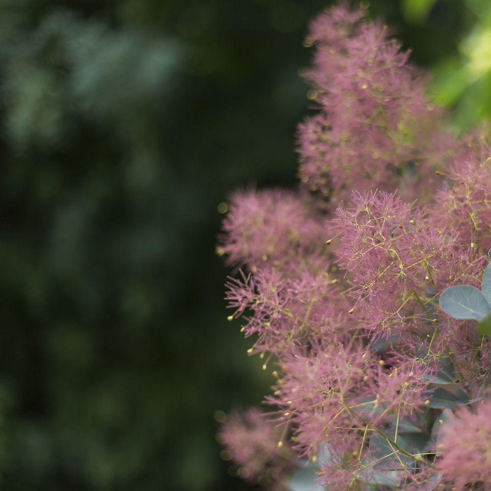 Arbre Persistant En Pot arbre à perruques 'grace'