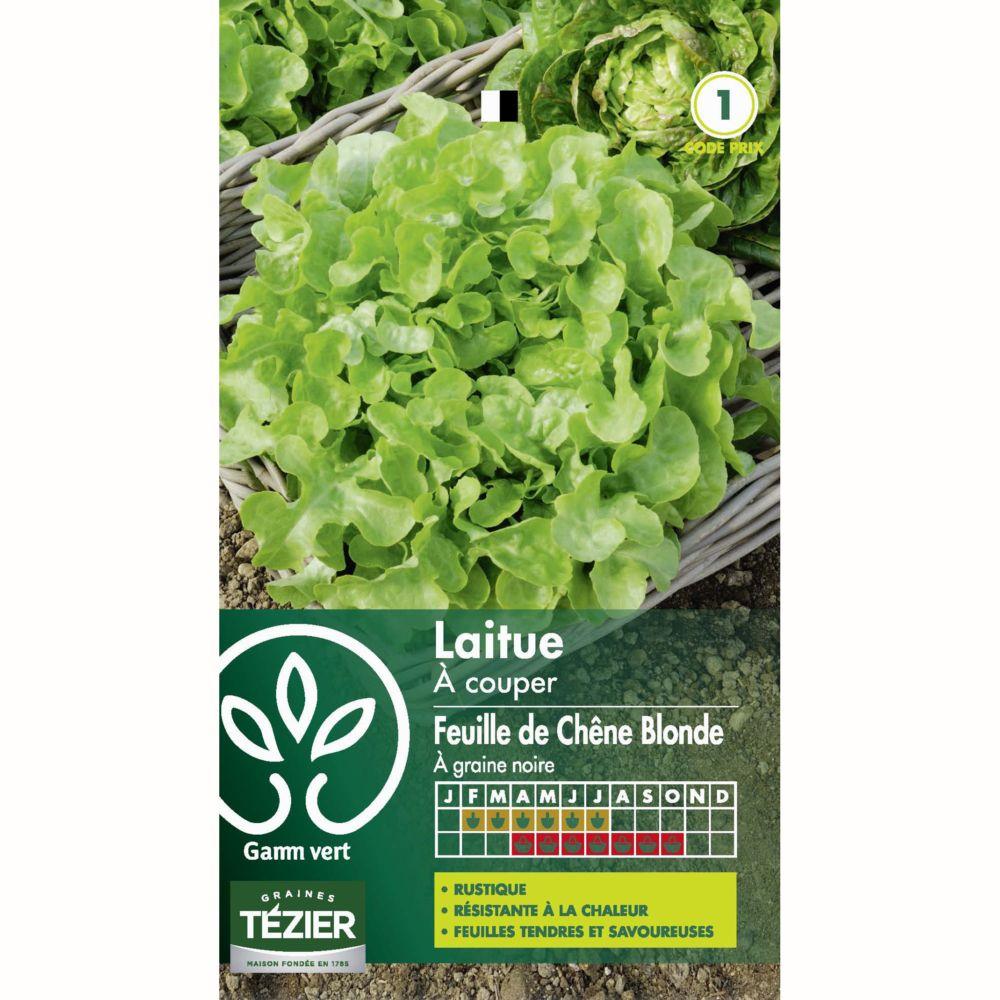 Salade : Laitue à couper Feuille de chêne blonde à graine noire
