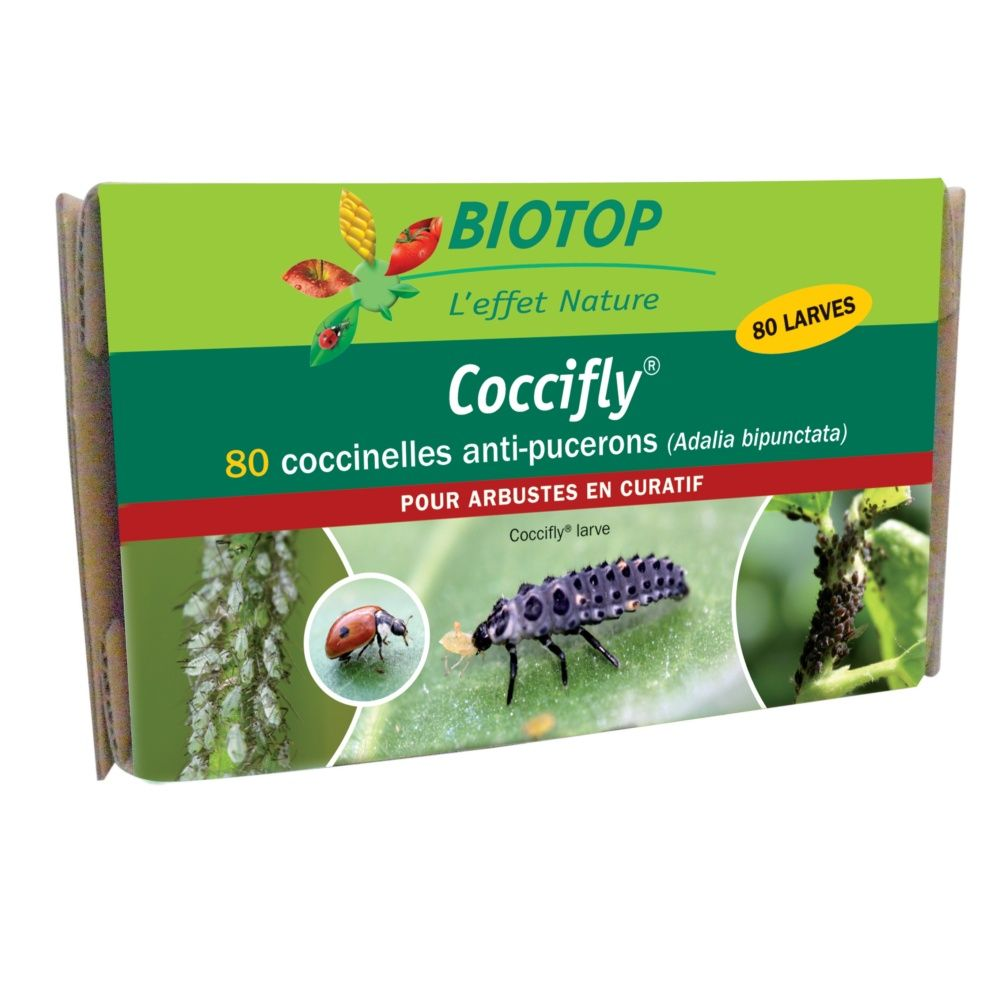 Coccifly 80 larves anti-pucerons arbustes - Biotop