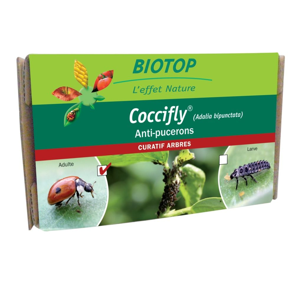 Coccifly Adalia bipunctata 100 coccinelles adultes contre pucerons Biotop