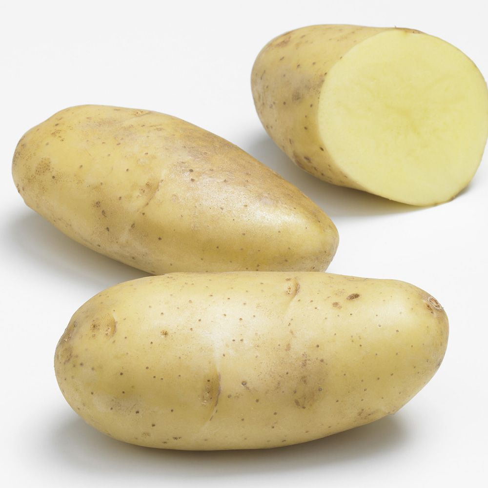 Pomme de terre 'Spunta' Filet 60 plants, calibre 28/35 - Gamm Vert